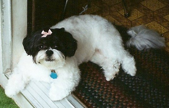 Puff after grooming visit - cutie