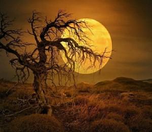 scraggly tree (2)