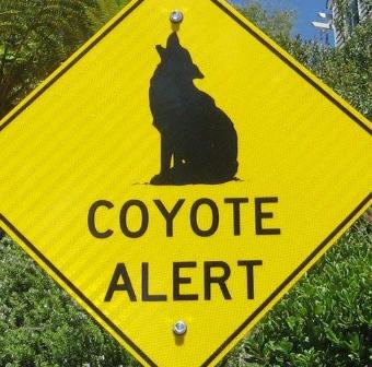 coyote alert (2)